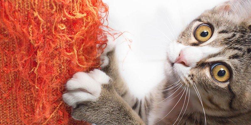 Katze ruiniert Bezug