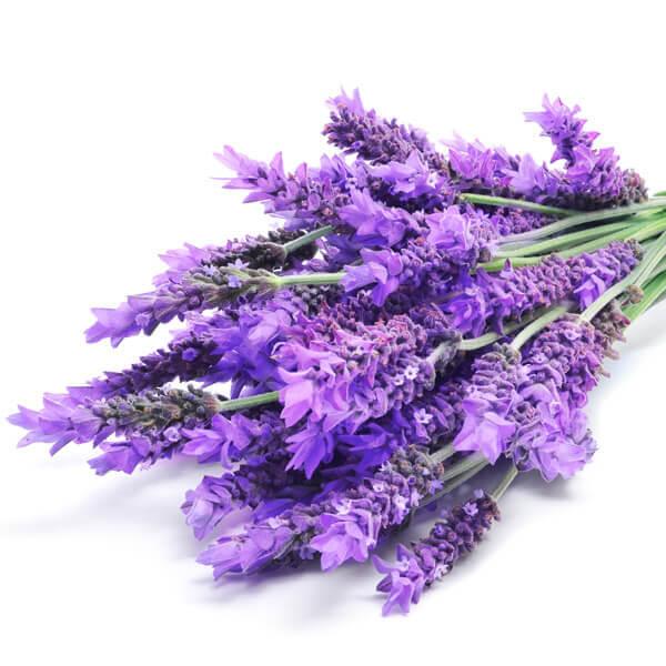 Frische im Kleiderschrank, Lavendel